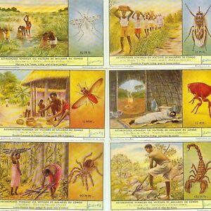 LIEBIG : S_1637 : 'Arthropodes venimeux ou vecteurs de