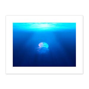 Lone-Jellyfish-Blue-Water-Canvas-Wall-Art-Print