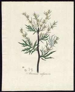 Details About Antique Print Common Mugwort Artemisia Vulgaris Wormwood 334 Flora Batava 1800