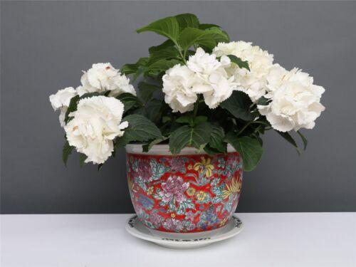 Porzellan Blumentopf Blumenübertopf Pflanztopf Rot Ø 29 cm P0064-4