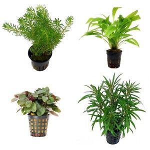 Special Assortment Nr 1 Aquatic Terrarium Plants 20 Pots Ebay