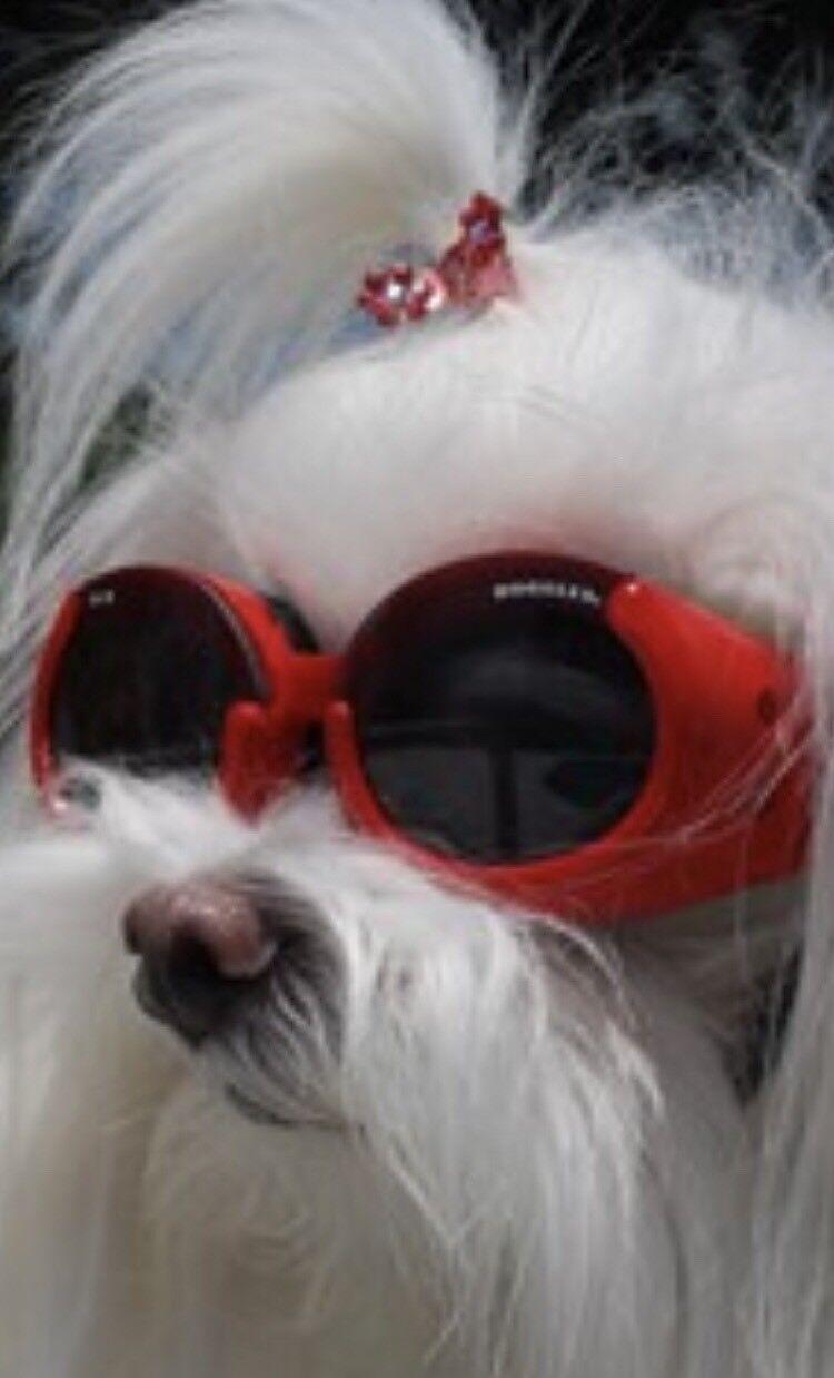 Doggles DGIL-13-M ILS Shiny Red Frame//Smoke Lens Hundesonnenbrille M