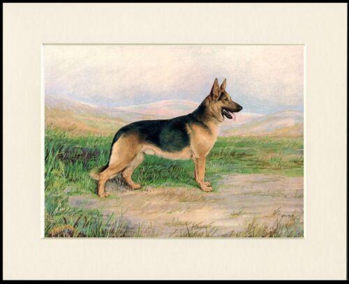 GERMAN SHEPHERD GREAT LITTLE DOG PRINT MOUNTED READY TO FRAME
