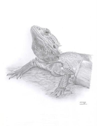 Barbudo Dragón Ltd Ed Arte Impresiones De Dibujo 2 Tamaños A4//A3 /& Nota tarjeta de saludos