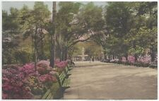 Postcards/Georgia-In Forsyth Park, Savannah GA-(divided, unposted)