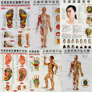 7pc Set English Acupuncture Meridian Acupressure Points Posters