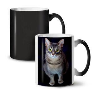 Cat Photo Cute Animal NEW Colour Changing Tea Coffee Mug 11 oz   Wellcoda