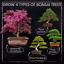 thumbnail 3 - Nature's Blossom Bonsai Tree Kit - Grow 4 Types of Bonsai Trees From Seed. Indoo