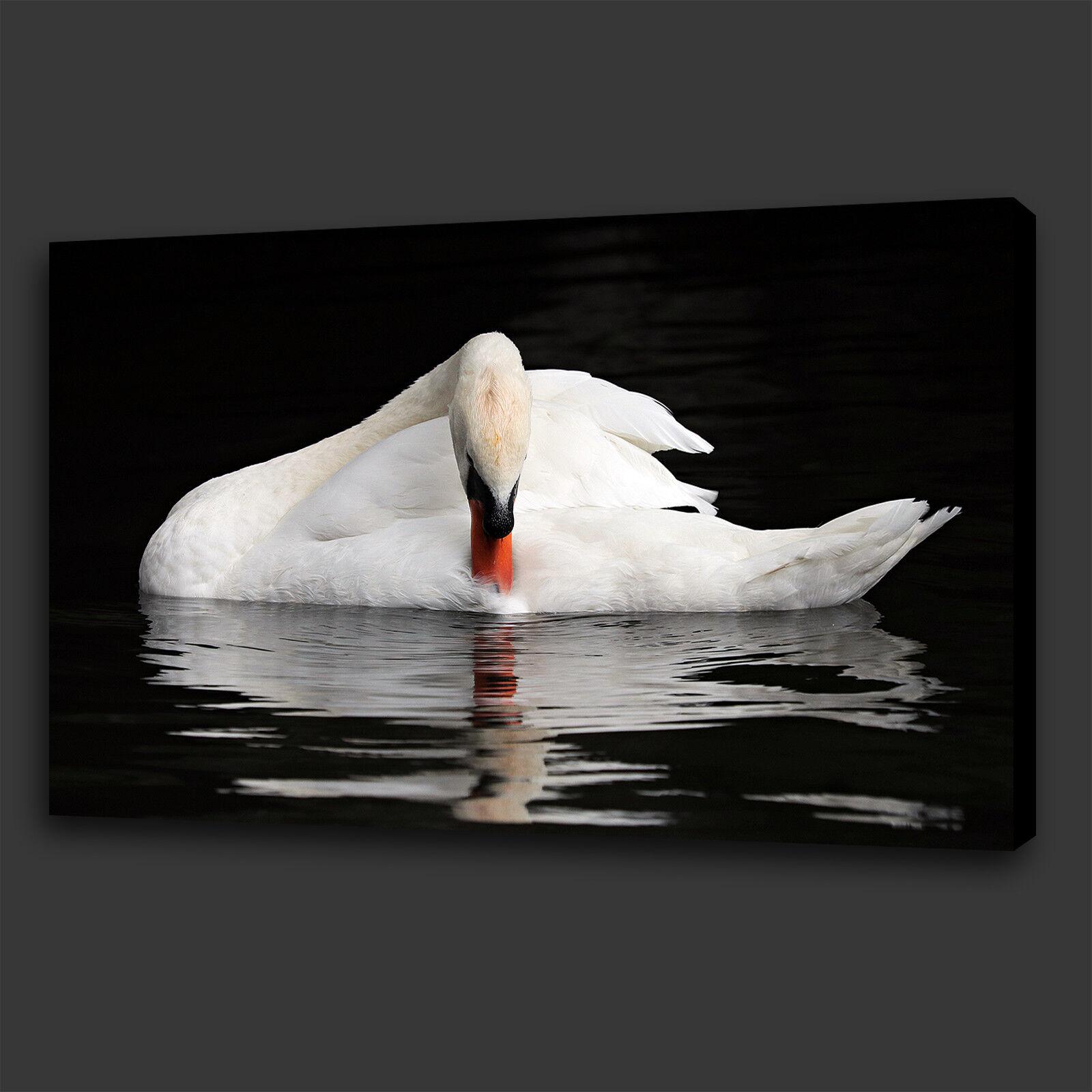 BELLISSIMO elegante Swan Bird Lake Scatola Tela Stampa Wall Art Picture Foto