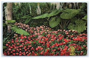 Postcard-Azaleas-in-Tropical-FL-Cypress-Gardens-near-Winter-Haven-1941-B36