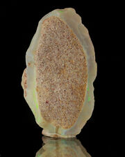 """1"""" Play-of-Color Iridescent OPALIZED CLAMSHELL Fossil Mintare Australia for sale"""