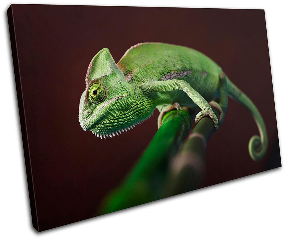 Gekko Wildlife Abstract SINGLE TELA parete arte foto stampa stampa stampa c148aa