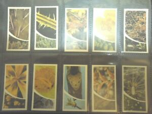 1981 Brooke Bond Tea  SMALL WONDERS under a microscope   Trading set  40 cards
