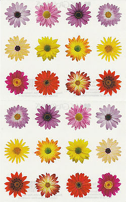Mrs. Grossman's Giant Stickers - Flowers by the Dozen - Photo Blooms - 2 Strips