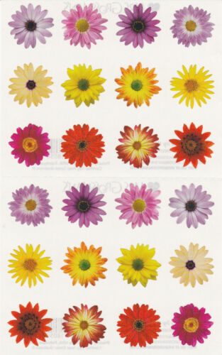 Flowers by the Dozen Grossman/'s Giant Stickers Mrs 2 Strips Photo Blooms