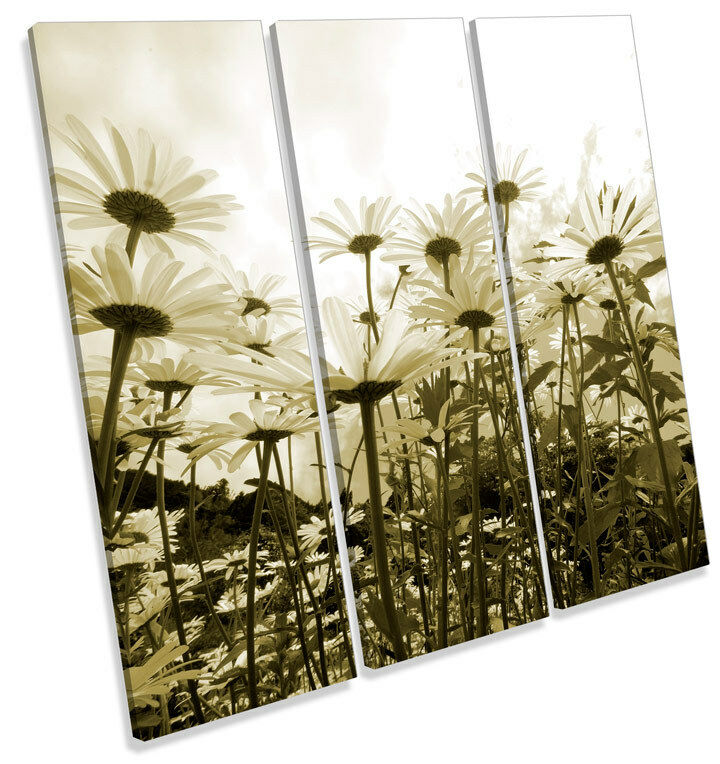 Daisy Sky Floral Flowers TREBLE CANVAS WALL ART Square Print Picture