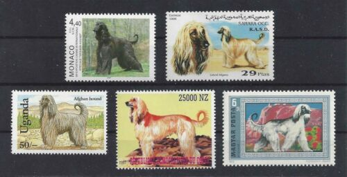 Dog Art Full Body Portrait Postage Stamp Collection AFGHAN HOUND 5 Five x MNH