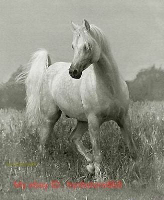ZOPT809 Slanting strong animal horse hand painted art OIL PAINTING on CANVAS