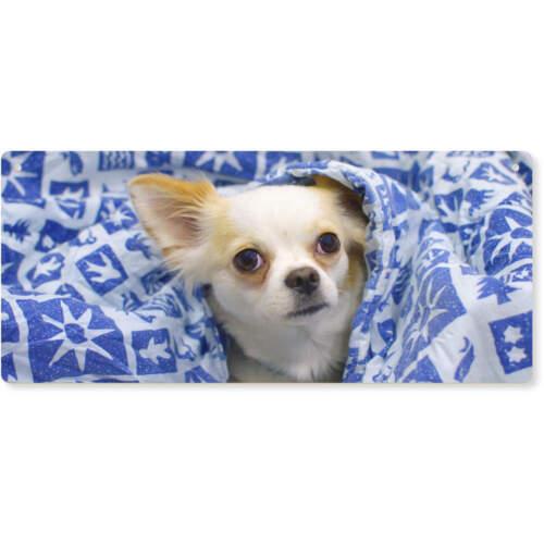 Türschild DP00008960 /'Chihuahua/' Groß Holzwand Plakette