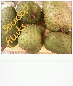 Sale Graviolasoursop tropical fruit approximately 2kgs wholesale - London, United Kingdom - Sale Graviolasoursop tropical fruit approximately 2kgs wholesale - London, United Kingdom