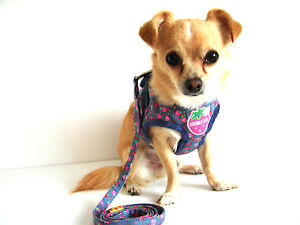 strawberry chihuahua small dog harness and lead set blue strawberry design 9726