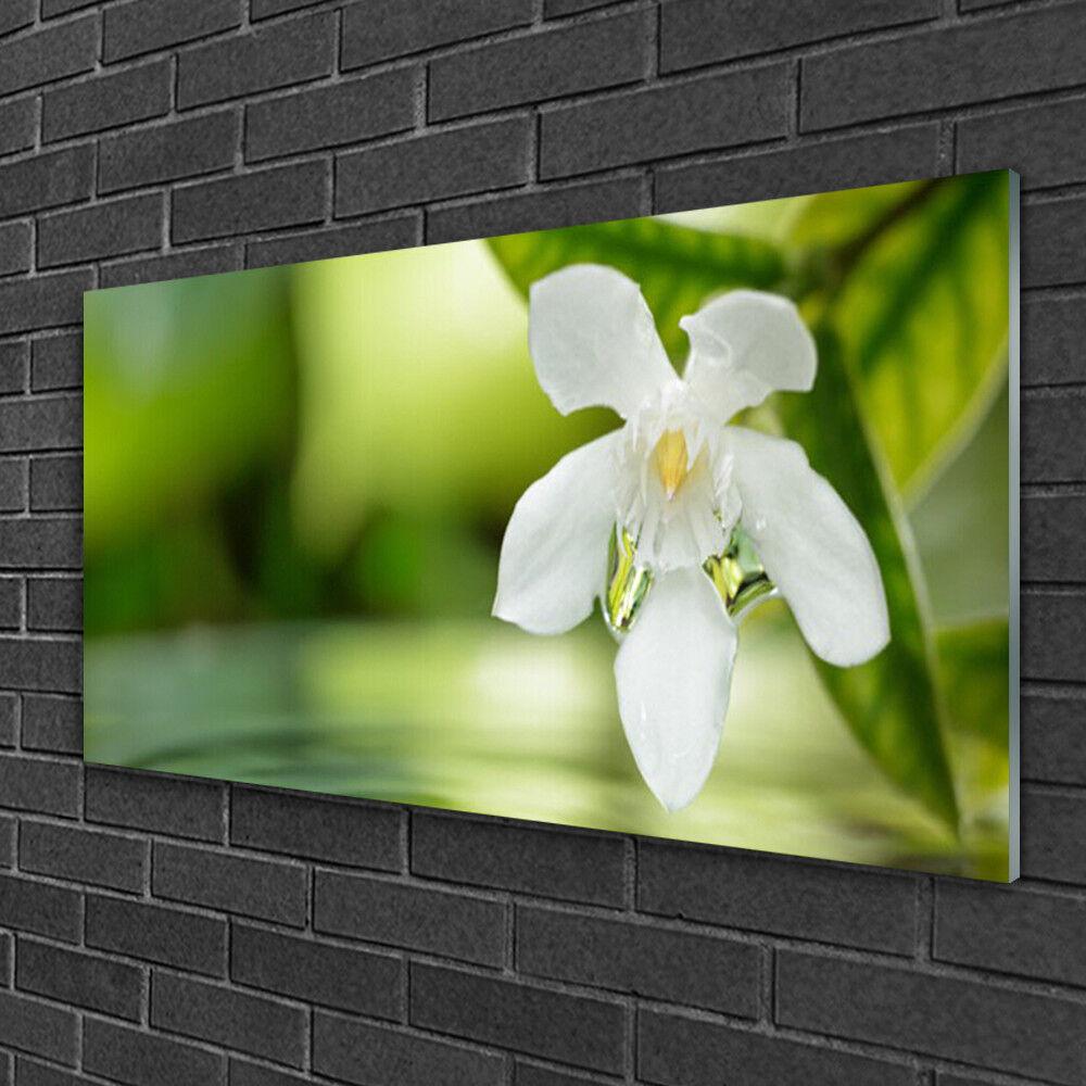 Image sur verre Tableau Impression 100x50 Feuilles Floral Fleurs Feuilles 100x50 c594c4
