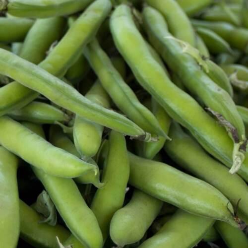 Bean Seeds 15 Roma II Flat Pod Bush Green Snap Vegetable USA FREE SHIPPING