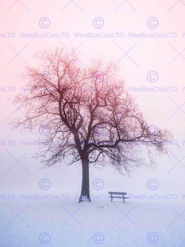 PHOTO LANDSCAPE WINTER SNOW FOGGY SUNRISE TREE BENCH ART PRINT POSTER MP3948B