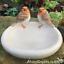 Robin-Bird-Bath-feeder-aged-stone-effect-bowl-ideal-garden-bird-robin-lover-gift miniatuur 2