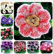 22 Colors Gloxinia Seeds Perennial Bonsai Balcony Flower - 100 Pcs Garden