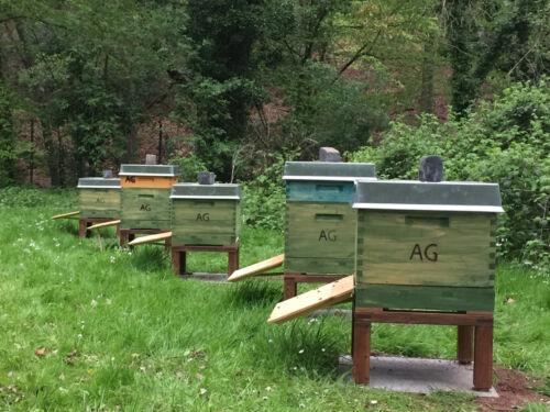 Von Imkern empfohlen Bienenverträglich! LIXUM Bienen Beutenschutz Holz-Lasur