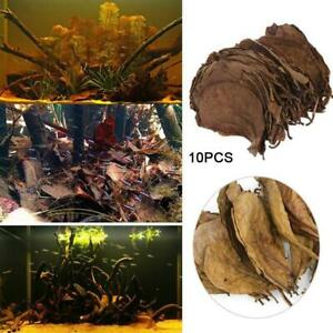 10pcs-Catappa-almond-leaves-ketapang-leaf-shrimp-betta-fish-aquarium-care-new