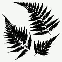 Ferns Stencil Leaf Plant Stencils Fern Leaves Template Pattern Craft By Tcw