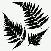 Mini Ferns Stencil Leaf Plant Stencils Templates Leaves Template Craft Paint