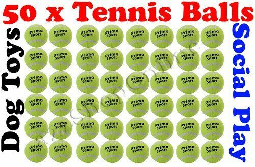 50 x Tennis Balls Coloured Bright Green For Pets Play   Dog Toys Bouncing Ball