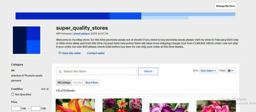 "Details about  /Plumeria//Frangipani//Plants///""Magenta/""//50 seeds"