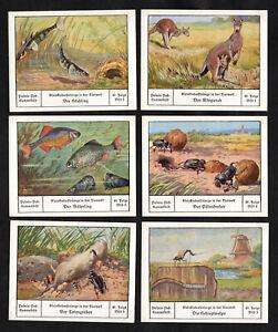 Animals Care Of Young Palmin Oil German Card Set 1930 Kangaroo Fish Dung Beetle