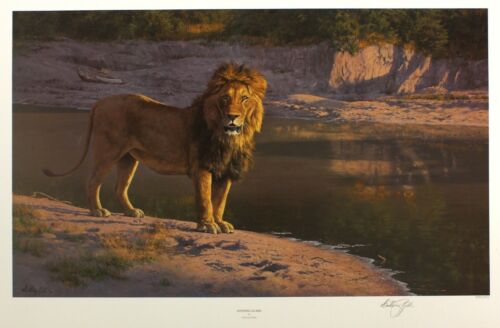 Glare evening Lion Edition Tama Gibbs Anthony Ltd 72cm 49cm o Signed Raro Nuevo x WRYpwFWqxU