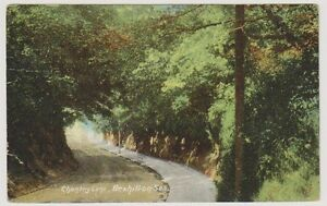 Sussex (East) postcard - Chantry Lane, Bexhill on Sea (A83)