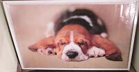 Bruiser Rare Sealed Poster Mid 2000's Animal Puppy Dog Cute Racheal Hale