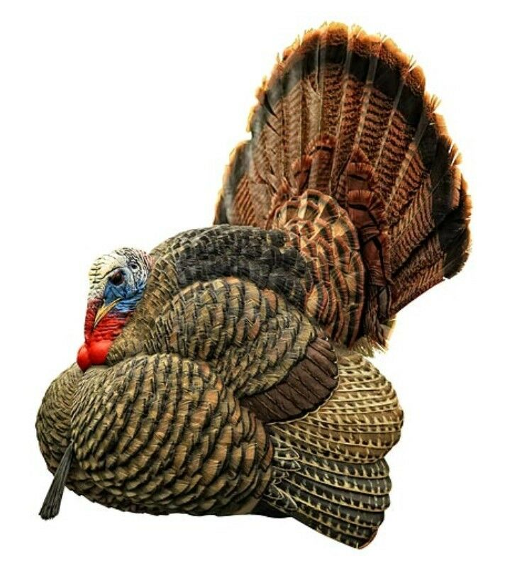 Avian X Strutter Turkey Decoy