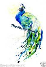 Peacock watercolour Animals Wildlife Picture Poster Home Art Print / Wall Decor