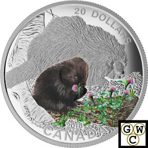 2016-Porcupine-Baby-Animals-Colorized-Proof-20-Silver-Coin-1oz-9999-17500