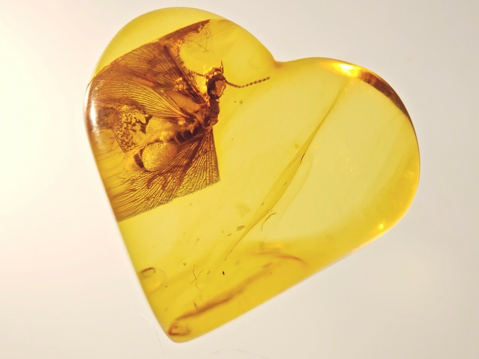 """Baltic amber """"HEART  with TERMITE fossil insect inclusion ()"""