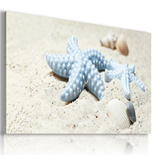STARFISH SAND MODERN PRINT CANVAS WALL ART PICTURE LARGE AB690 MATAGA .