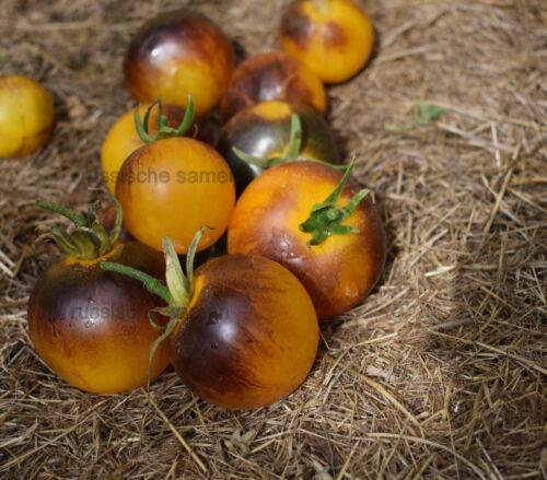 "10 oder 50 Samen Neu 2019 Tomatensamen /"" Primary Colors  /"""