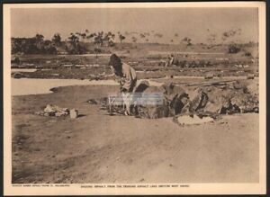 Digging-Asphalt-From-Trinidad-Asphalt-Lake-Original-1919-Photogravure-Print