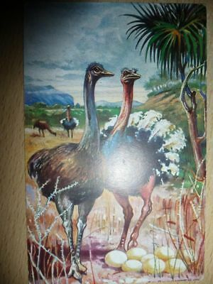 Ausdauernd Postkarte - Kolonialkriegerdank