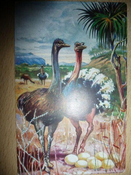Liefern Postkarte - Kolonialkriegerdank