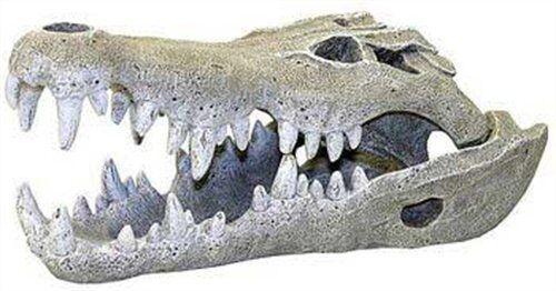 pinkwood Nile Crocodile Skull Aquarium Decor, Large